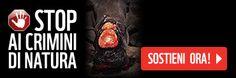 Presentata la campagna Crimini di Natura del WWF | Gazzetta della Val d'Agri