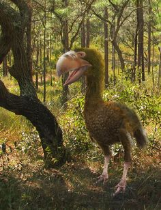 "Gastornis giganteus by Leogon on DeviantArt. ""Gastornis is an extinct genus of large flightless birds that lived during the late Paleocene and Eocene epochs of the Cenozoic era. The genus is currently thought to contain three or four distinct species, known from incomplete fossil remains, found in western-central Europe (England, Belgium, France and Germany). Many scientists now consider Diatryma . . should also be included in that genus"" as found in North America. 5th species evolved in…"