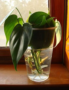 Five Easy Houseplants and How to Grow Them