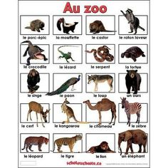 Animal names in French The Zoo, French Education, Kids Education, How To Speak French, Learn French, Child Development Activities, French Classroom, French Resources, Printable Pictures