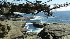 Along the WCT  The waters off of Vancouver Island's coast, from the West Coast Trail. (Jonah Flicker)