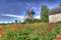 Wind mill, Öland Windmill, Wonderful Places, Norway, Poppies, Awesome, Travel, Beautiful, Kalmar, Sweden