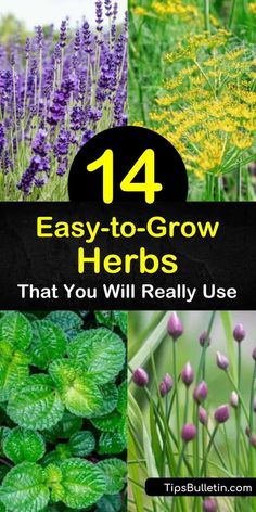 Learn how to grow herbs in an outdoor or windowsill garden and enjoy flavorful food year-round. Grow cilantro, basil, oregano, lemon balm, and spearmint plants and enjoy easy to grow fresh herbs in Greek, Italian, or other favorite cuisines. #easytogrow #herbs #growingherbs #herbgarden Gardening For Beginners, Gardening Tips, Urban Gardening, Vegetable Gardening, Aromatic Herbs, Medicinal Herbs, Mint Herb, Growing Mint, Cooking Herbs