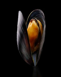 experiment with dramatic lighting of a mussel. I used a optical spot coming from above and behind the subject, a small softbox to camera right and a white card as a front fill. Mussels Recipe Tomato, Mussels Marinara, Chilli Mussels, Garlic Mussels, Grilled Mussels, Baked Mussels, Dark Food Photography, Still Life Photography, Cooking Mussels
