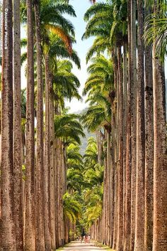 Row of palms...such a peaceful place