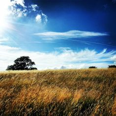 Butser Hill