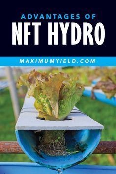 A little research and preparation will go a long way when it comes to nutrient film technique (NFT) hydroponic systems. But if it's simplicity, low cost, and maximum yields you are after, NFT could be the system for you. Nft Hydroponics, Hydroponic Farming, Aquaponics Greenhouse, Hydroponic Systems, Hydroponic Growing, Hydroponic Strawberries, Water Garden, Backyard Landscaping, Urban Gardening