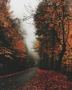 Find images and videos about nature, autumn and fall on We Heart It - the app to get lost in what you love. Autumn Cozy, Autumn Photography, All Nature, Fall Pictures, Jolie Photo, Autumn Inspiration, Fall Season, Fall Halloween, Autumn Leaves