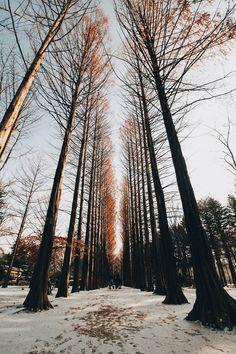 nami-island - metasequoia lane (winter sonata were shot) Korea Tourist Spots, Cities In Korea, Chuncheon, Beautiful Places To Travel, Cool Places To Visit, Nami Island Korea, Seoraksan National Park, Korea Winter, South Korea Travel