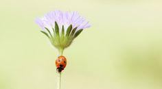 ladybug by yasin mortaş - Photo 130161263 - 500px