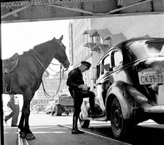 Police officer (on horseback) giving a ticket on Coney Island