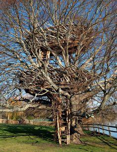 As 20 casas na árvore mais legais dos últimos tempos – Nômades DigitaisNômades…