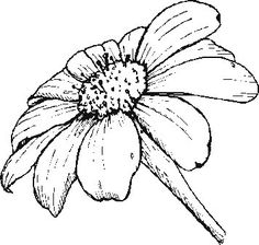 Poppy traceable angelafineart art pinte for Daisy head mayzie coloring pages