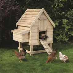 Small chicken coup