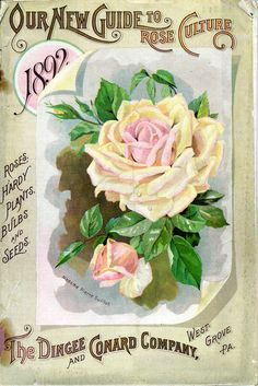 Items similar to The Dingee Conrad Co. 03 Rose Growers Seed and Plant 1892 Seed Company Bright Colorful Print Vintage Reproduction Print 11 on Etsy Pub Vintage, Vintage Poster, Vintage Labels, Vintage Postcards, Vintage Art, Vintage Ephemera, Vintage Prints, Garden Catalogs, Seed Catalogs