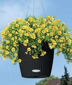 Hanging Planter Basket Water Catchers Clever Idea