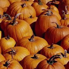 Tips on Harvesting Pumpkins and Saving the Seeds