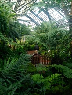 The Fern Room at the Lincoln Park Conservatory
