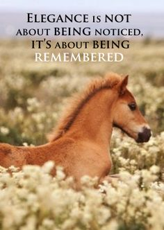 #horse #quote #ahorsebox