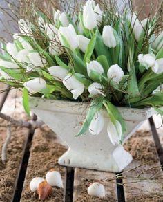 white tulips + white vase = gorgeous
