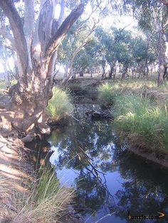 Billbong Creek (Goobang Ck) near the place where Ben Hall was shot and killed (5th May 1865)