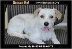 Rescue Me ID: 15-05-29-00478Nancy (female)  Maltese Mix    Age: Young Adult  Compatibility:	 Good with Most Dogs  Health:	 Spayed, Vaccinations Current       Nancy is a beautiful young girl who is ready for her forever home after being rescued from the shelter. She is a total lovebug who loves other dogs and will do best in a home with at least one other dog. She loves to play with squeaky toys and adores rope toys. She weighs 10 lbs full grown and would love nothing more than a family of…