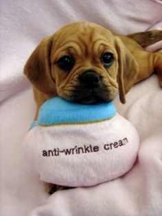 Now that's funny! Puggle