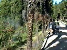 Крым 1996 года в августе