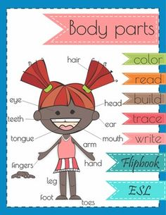 13 body parts included in Body Parts Flip Book product are:head, hair, eyes, ears, nose, mouth, arm, hand, fingers, leg, foot, toes, teeth5 pages color, read, build, trace and write worksheetsCustomer Tips:Save money on your future purchases, provide feedback and earn TPT credit (My Purchases page, Provide Feedback button).
