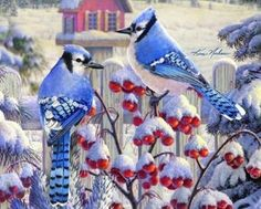 Winter Blue Jays (not sure of artist) (120 pieces)