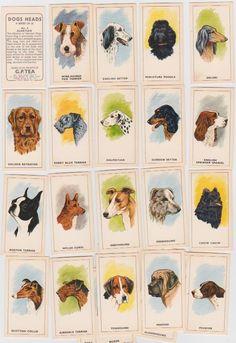 cigarette cards/trade g.p.tea dogs 25/25 | eBay
