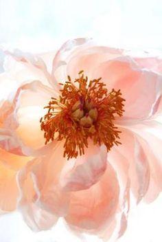 via Flower Story