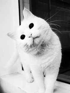 black, black and white, cat, cute