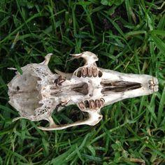 Llittle skull in the park