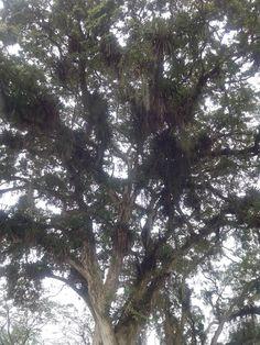 natureza em Curitiba