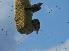 finch birds snacking block