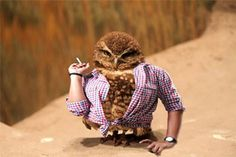 I can only think of Hedwig...if only this owl was white...