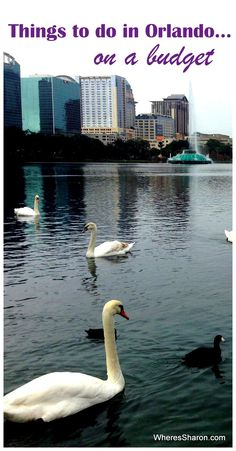 Things to do in Orlando on a budget when travelling to Orlando with kids