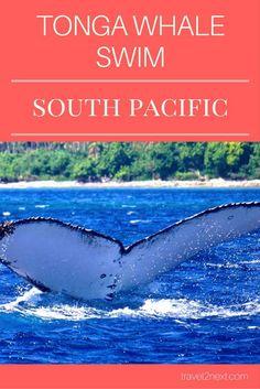 Tonga Whale Swim | Whale Magic in The Kingdom Of Tonga: http://travel2next.com/tonga-whale-swim-whale-magic-in-the-kingdom-of-tonga/