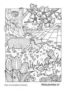 Kleurplaat Kuikentjes Thema Lente Voor Kleuters