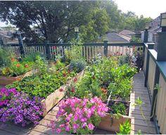 Rooftop Garden on Garage -