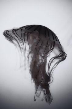 jelli fish, animals, aquariums, art, bathrooms, sea, beauty, ink in water photography, black