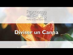Promesse de Fleurs - YouTube Comment Planter, Planters, Orange, Decoration, Gardens, Succulents Garden, Yellow, Green, Perennial Plant