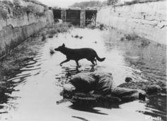 Tarkovsky 'Stalker'