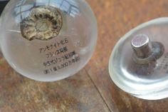 Ammonite magnets. アンモナイト化石のマグネット Copyright © 2014 FUNFUNFUNGI (Mieko Fukuhara)