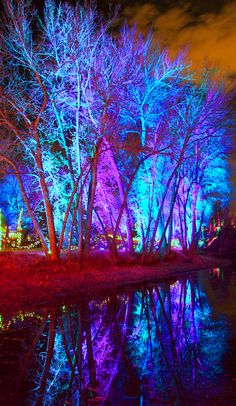 The Wetlands light up with holiday cheer! #AHudsonChristmas