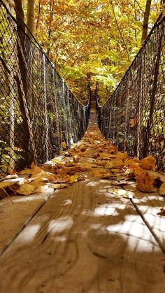 Canopy walk Michigan  fall bridge