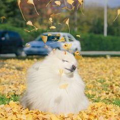 Solta ao vento!!!