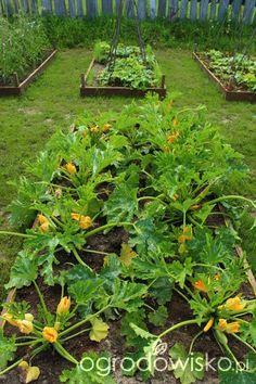 My Secret Garden, Garden Gates, Vegetable Garden, Seeds, Vegetables, Gardening, Vegetable Gardening, Plants, Balcony