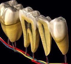Dental Health, Oral Health, Local Dentist, Teeth Dentist, Dental Care Center, Dental Anatomy, Dental Office Decor, Dental Technician, Dental Assistant Jobs